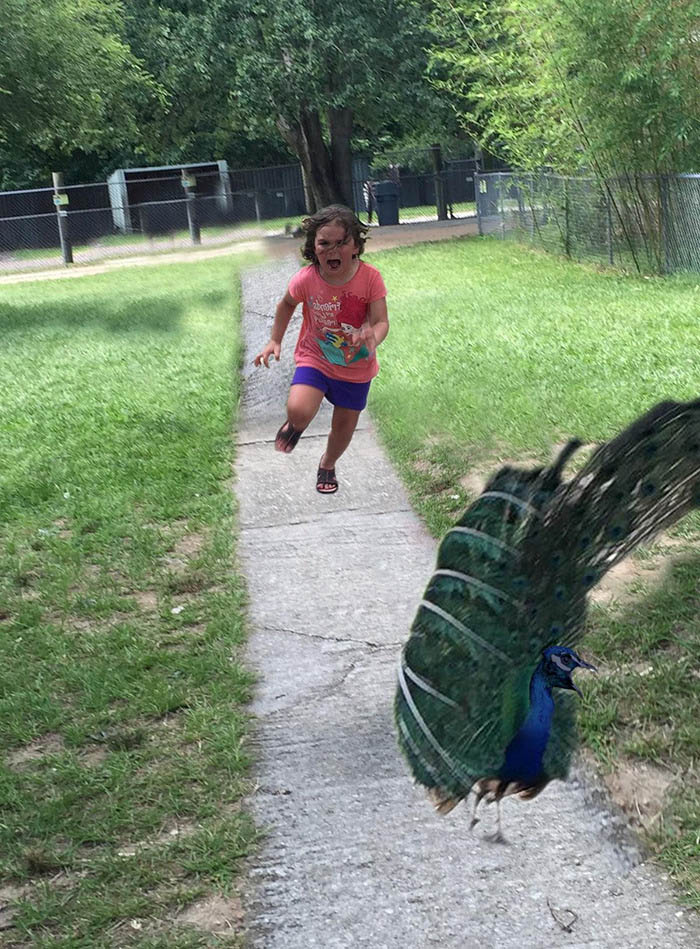 girl-running-from-peacock-photoshop-battle-vinegret (15)