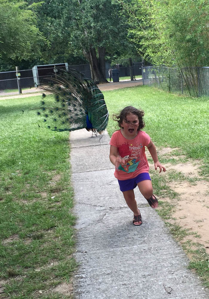 girl-running-from-peacock-photoshop-battle-vinegret (17)