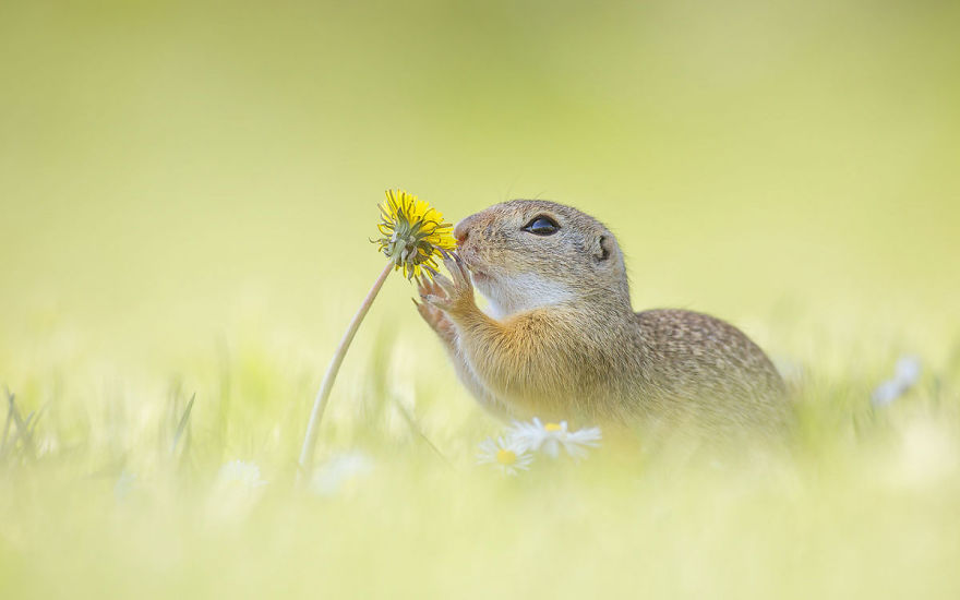 Henrik_Spranz_european_ground_squirrels (13)