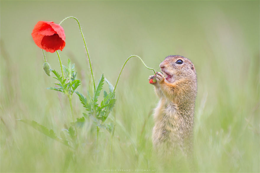 Henrik_Spranz_european_ground_squirrels (15)