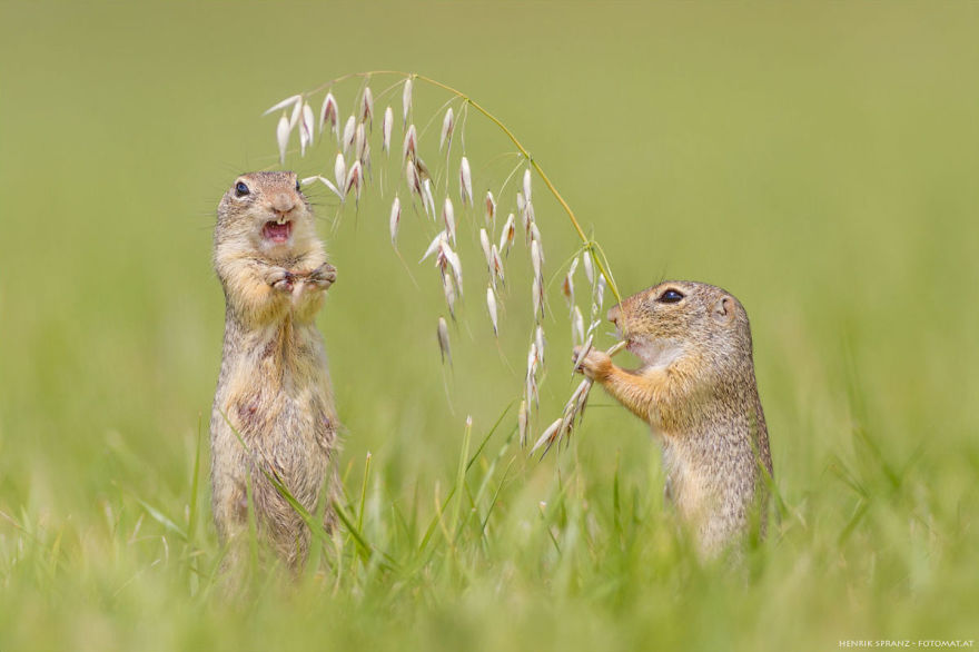 Henrik_Spranz_european_ground_squirrels (18)