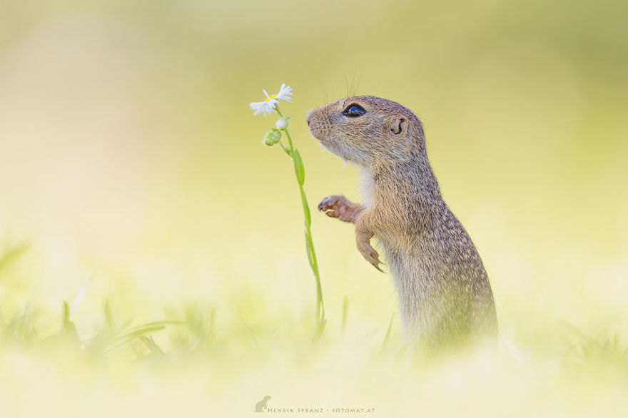 Henrik_Spranz_european_ground_squirrels (20)