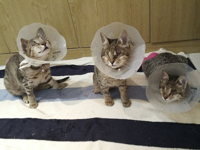 adopted-three-blind-cats-vinegret (11)