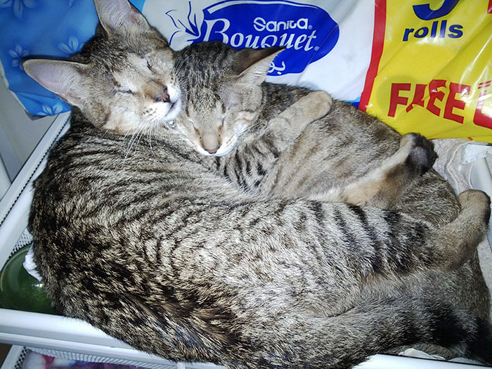 adopted-three-blind-cats-vinegret (7)