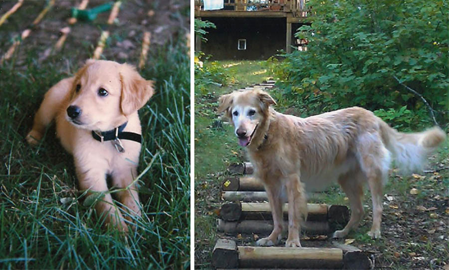 before-after-pets-growing-old-first-last-photos-vinegret (1)