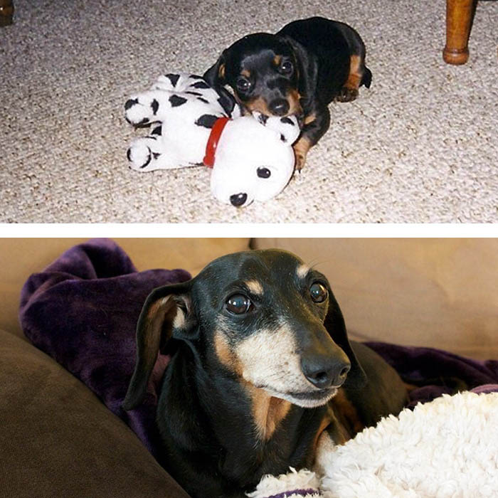 before-after-pets-growing-old-first-last-photos-vinegret (10)