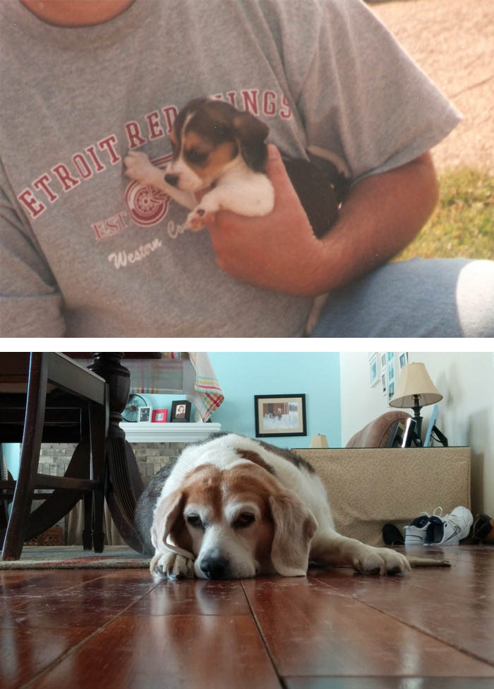 before-after-pets-growing-old-first-last-photos-vinegret (4)