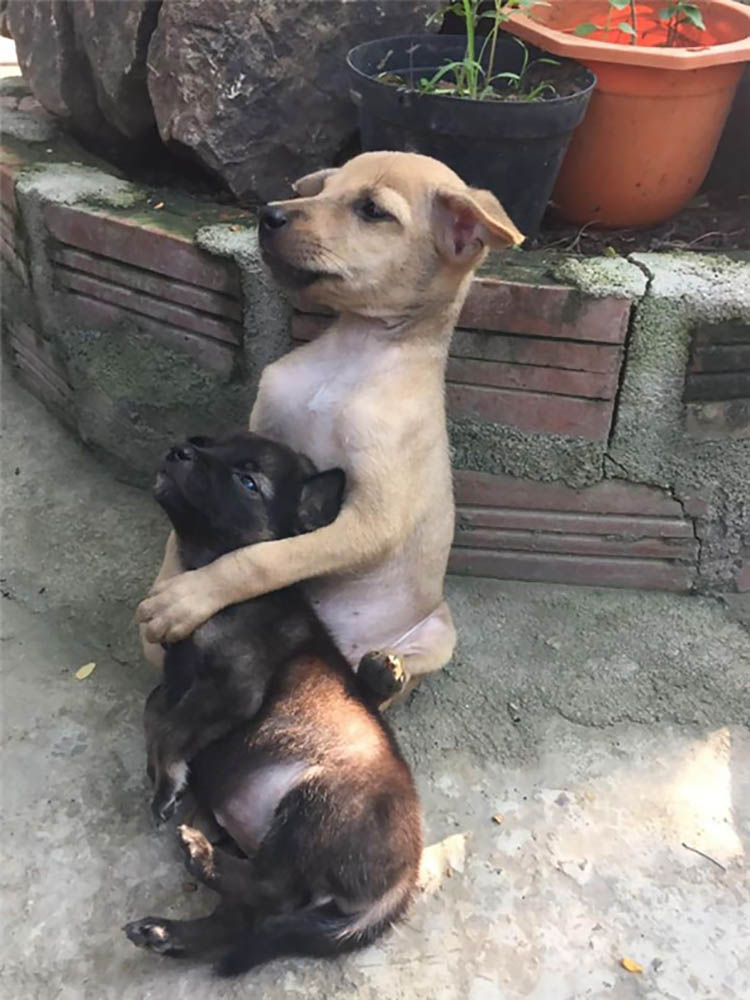 adopted-dogs-cuddle-buddhist-nuns-china-vinegret (5)
