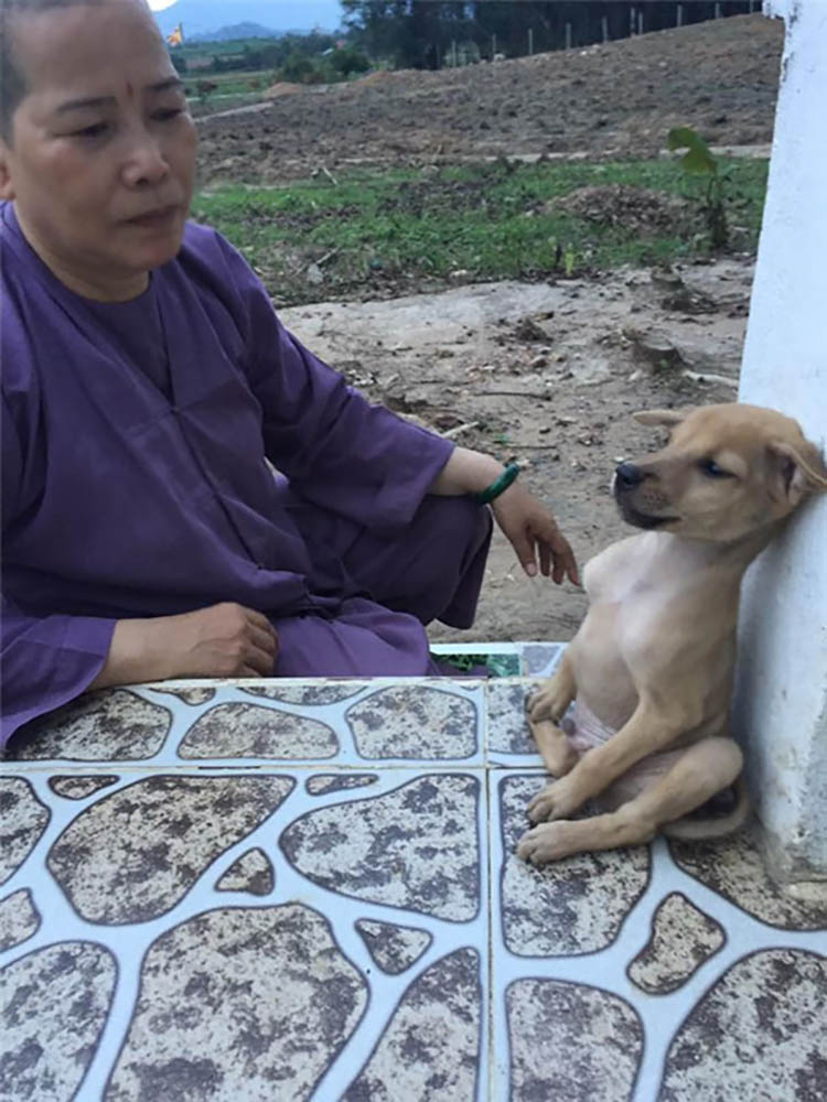 adopted-dogs-cuddle-buddhist-nuns-china-vinegret (8)
