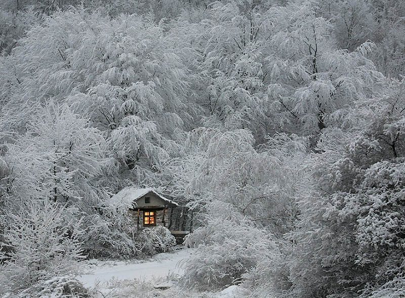 cozy-cabins-in-the-woods-vinegret (6)