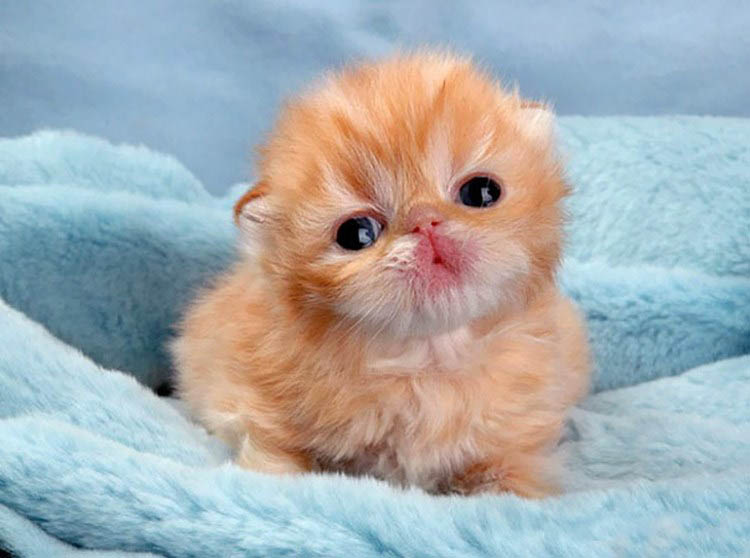 cute-kittens-vinegret (4)