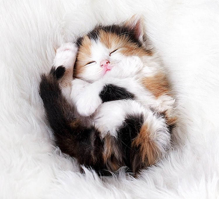 cute-kittens-vinegret (5)