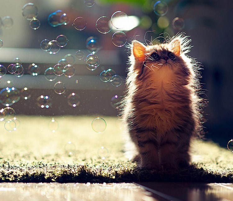 cute-kittens-vinegret (7)