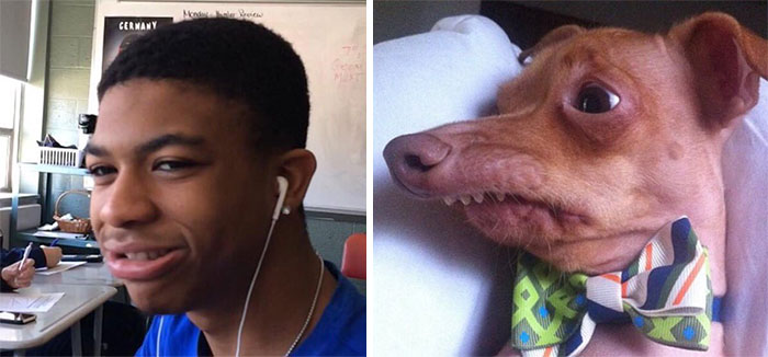 humans-look-like-dogs-doppelganger-you-are-dog-now-twitter-vinegret (13)