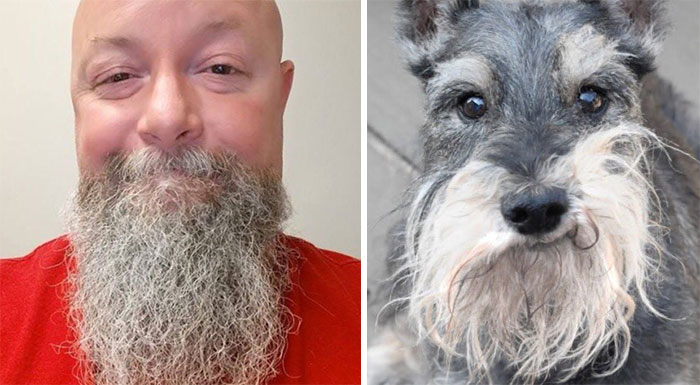 humans-look-like-dogs-doppelganger-you-are-dog-now-twitter-vinegret (18)