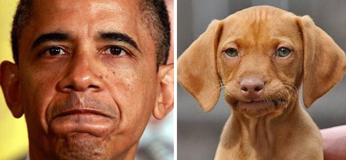 humans-look-like-dogs-doppelganger-you-are-dog-now-twitter-vinegret (5)