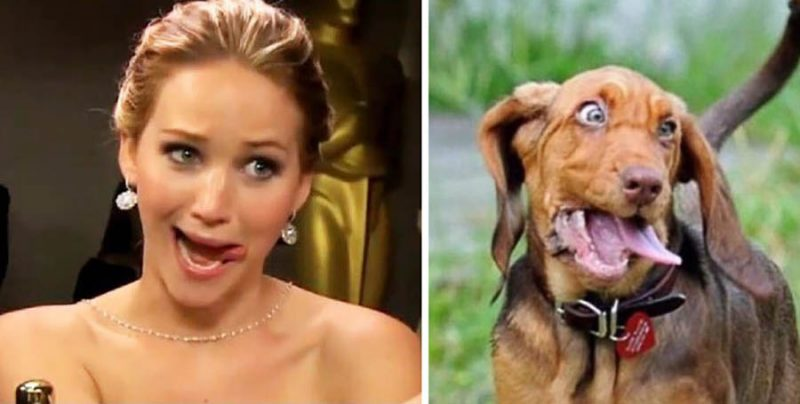 humans-look-like-dogs-doppelganger-you-are-dog-now-twitter-vinegret (7)