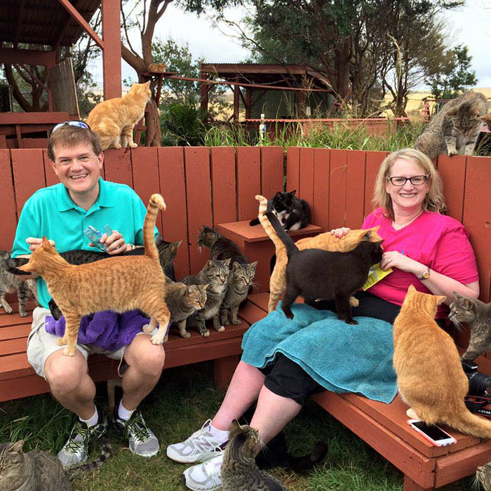 lanai-cat-sanctuary-hawaii-vinegret (6)