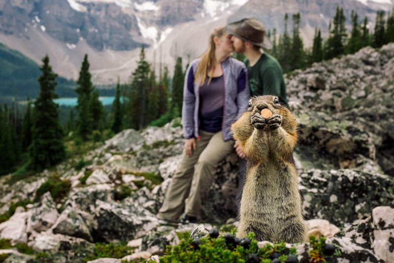 squirrel-photobombs-engagement-photoshoot-kelin-flanagan-spencer-taubner-bdkf-vinegret (6)