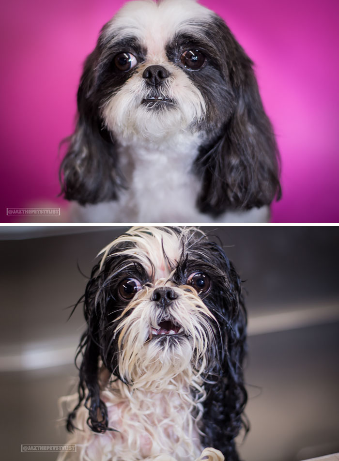 wet-dogs-before-after-bath-vinegret (19)