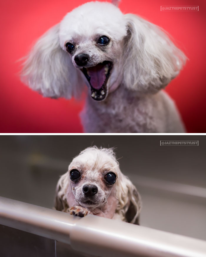 wet-dogs-before-after-bath-vinegret (20)