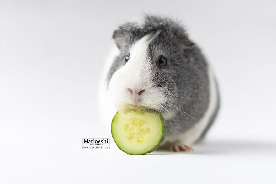 mieps-the-photogenic-piggy-vinegret-5