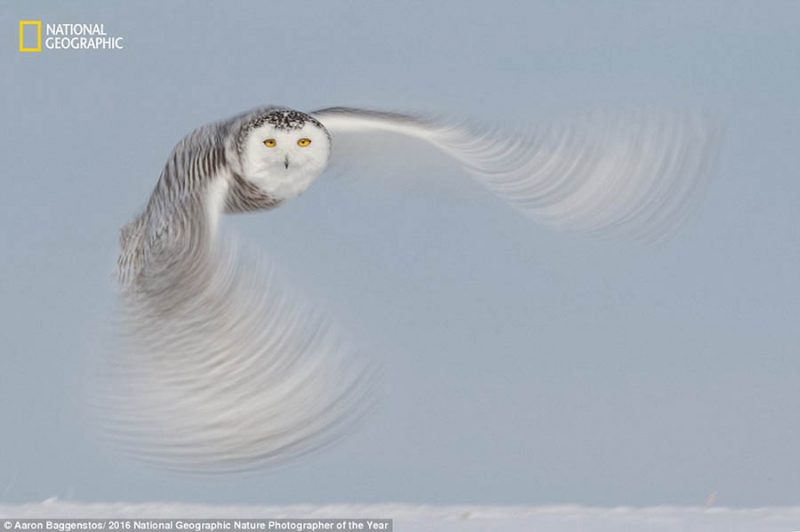 national-geographic-nature-photographer-of-the-year-2016-vinegret-5