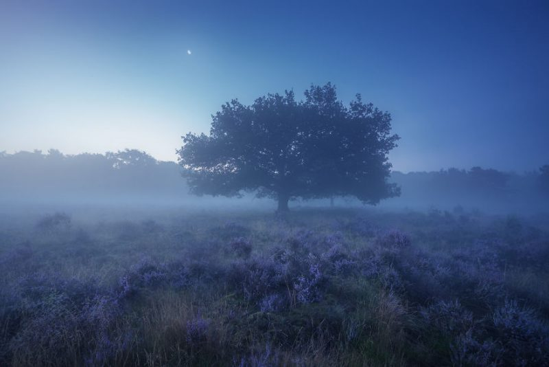 august-when-the-netherlands-turns-into-purple-dreamscapes-vinegret-1