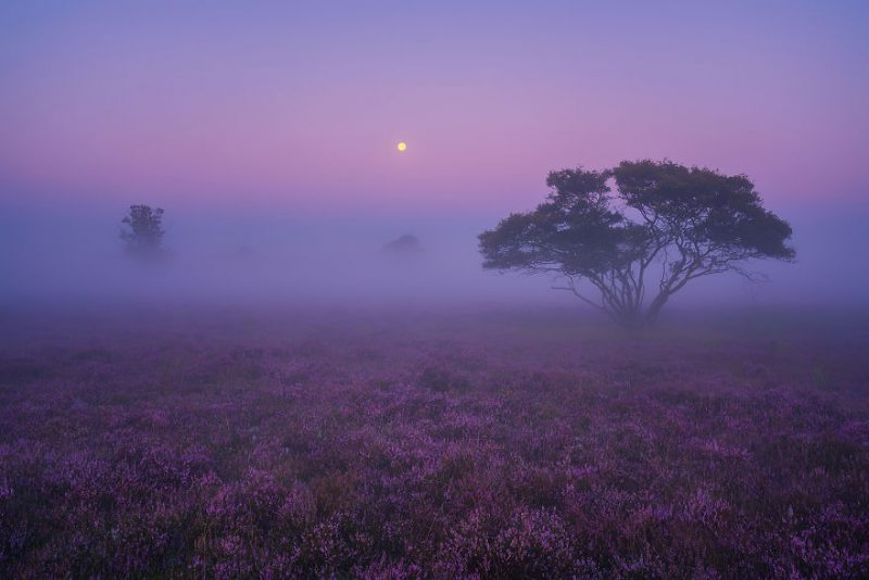 august-when-the-netherlands-turns-into-purple-dreamscapes-vinegret-2