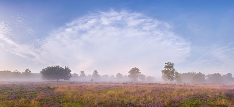 august-when-the-netherlands-turns-into-purple-dreamscapes-vinegret-3