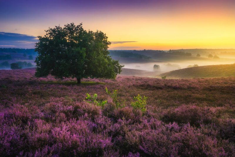 august-when-the-netherlands-turns-into-purple-dreamscapes-vinegret-5