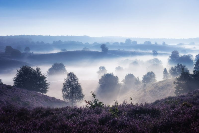 august-when-the-netherlands-turns-into-purple-dreamscapes-vinegret-8