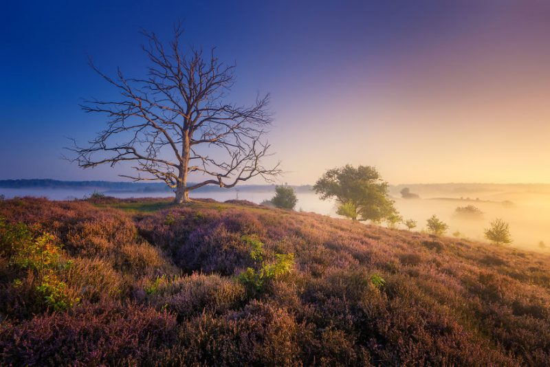 august-when-the-netherlands-turns-into-purple-dreamscapes-vinegret-9