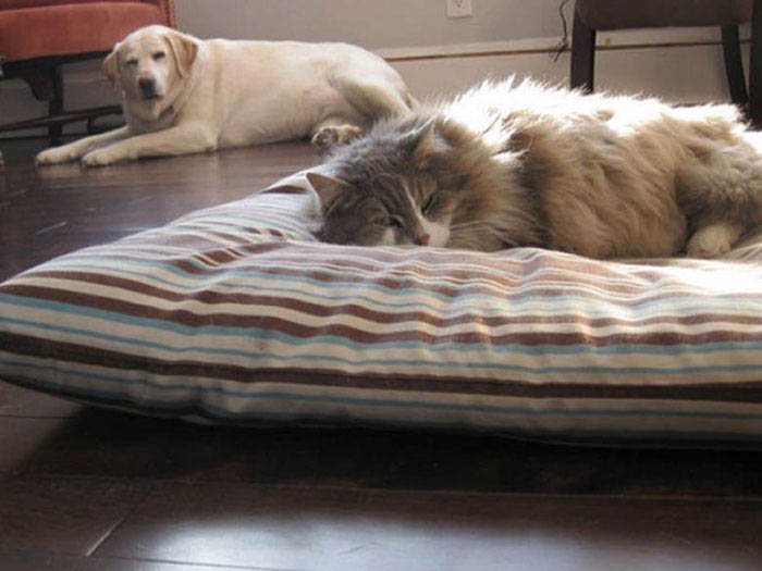 cats-stealing-dog-beds-vinegret-1
