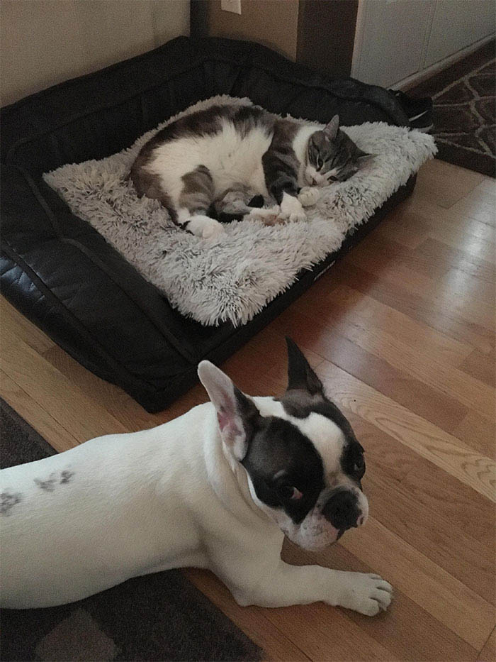 cats-stealing-dog-beds-vinegret-10