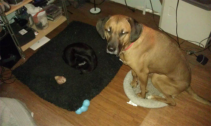 cats-stealing-dog-beds-vinegret-12