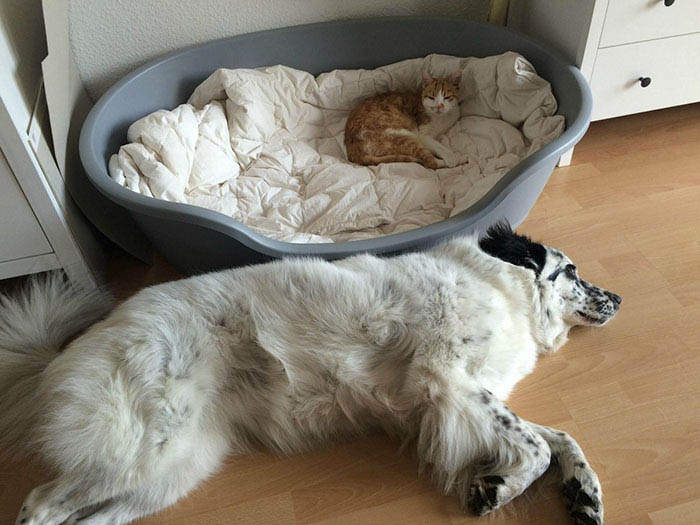 cats-stealing-dog-beds-vinegret-15