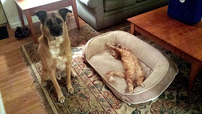 cats-stealing-dog-beds-vinegret-17