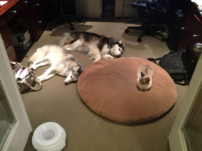 cats-stealing-dog-beds-vinegret-19