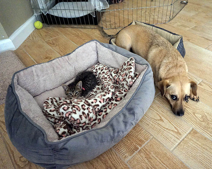 cats-stealing-dog-beds-vinegret-2