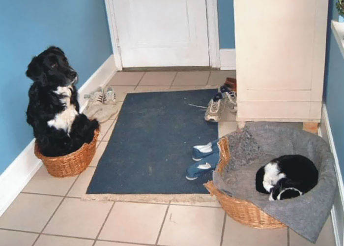 cats-stealing-dog-beds-vinegret-4