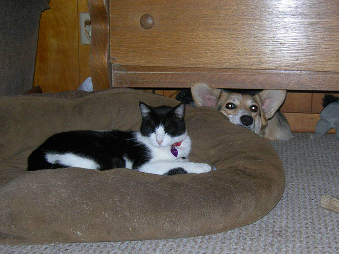 cats-stealing-dog-beds-vinegret-5