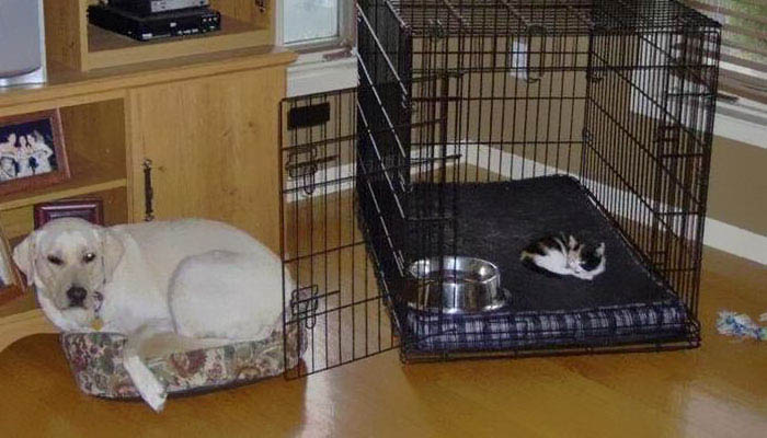 cats-stealing-dog-beds-vinegret-6