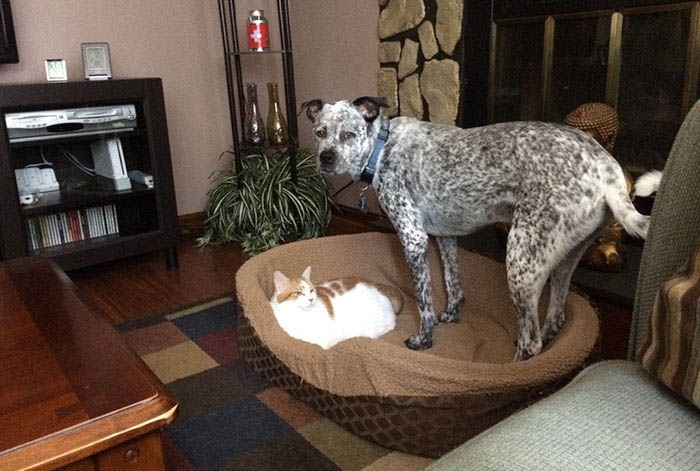 cats-stealing-dog-beds-vinegret-7