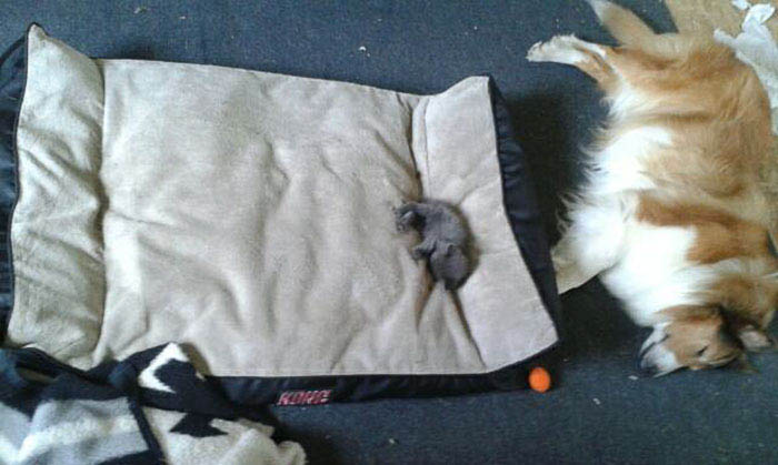 cats-stealing-dog-beds-vinegret-8