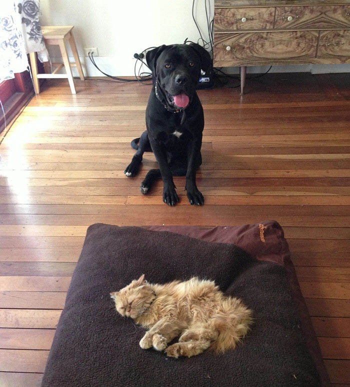 cats-stealing-dog-beds-vinegret-9