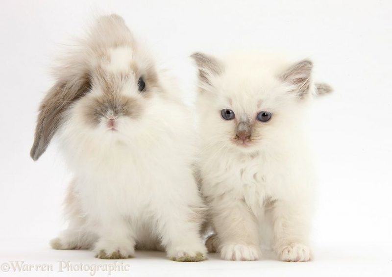 cute-matching-pets-warren-photographic-vinegret-14