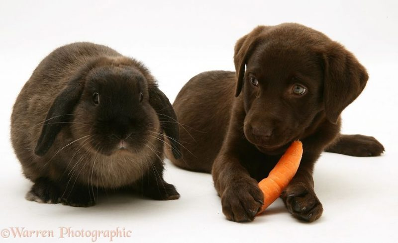 cute-matching-pets-warren-photographic-vinegret-15