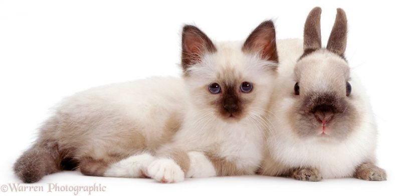 cute-matching-pets-warren-photographic-vinegret-2