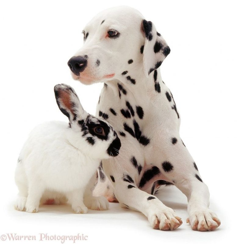 cute-matching-pets-warren-photographic-vinegret-3